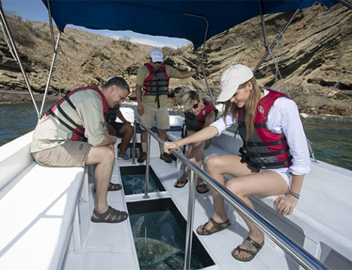 How to Charter a Luxury Yacht in Galapagos