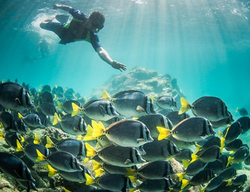 Snorkeling on a Galapagos Cruise